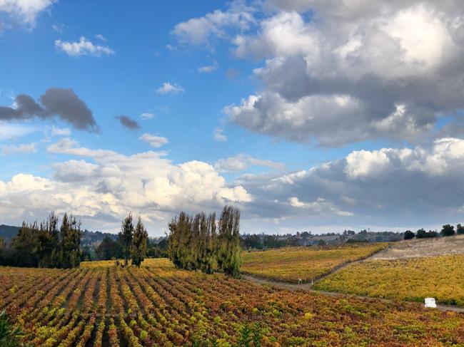 Relación calidad precio, el secreto del vino en Chile